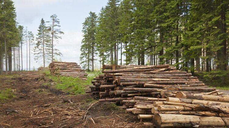 В Одесской области лесов станет больше: принята профильная программа