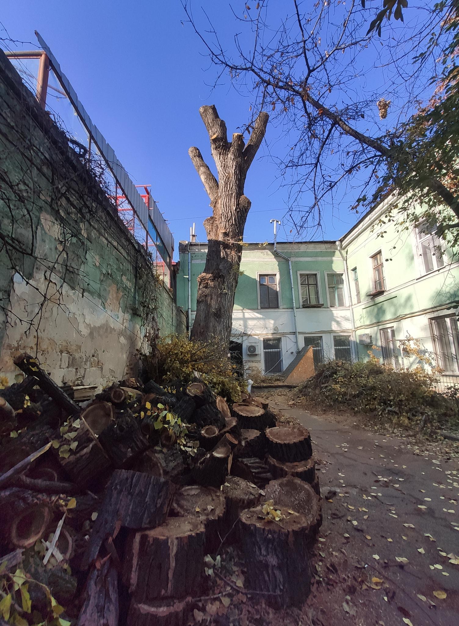 уничтожение Пушкинского тополя