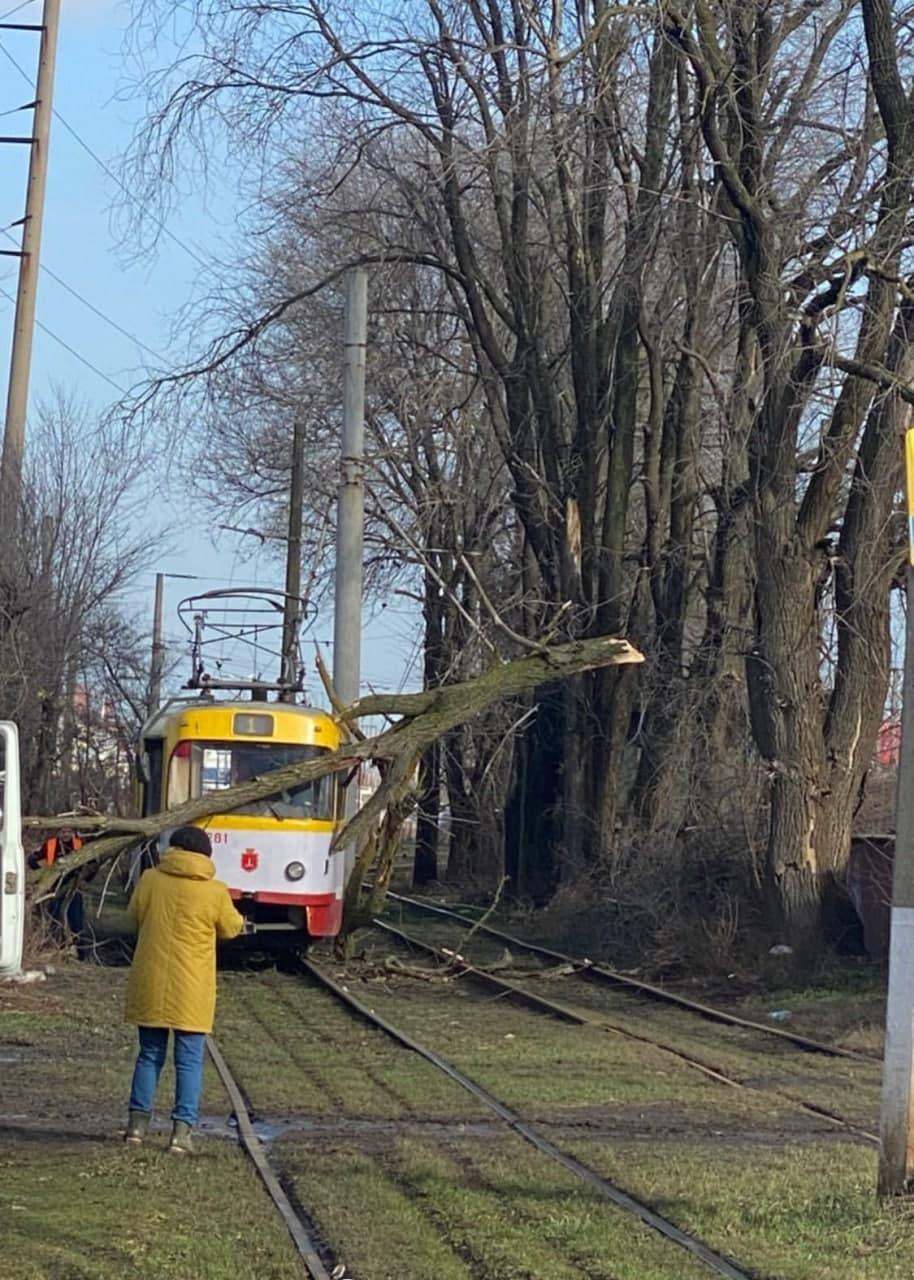 рухнуло дерево