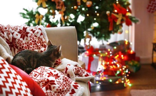 Выходные на Рождество