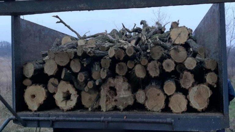 вывоз древесины