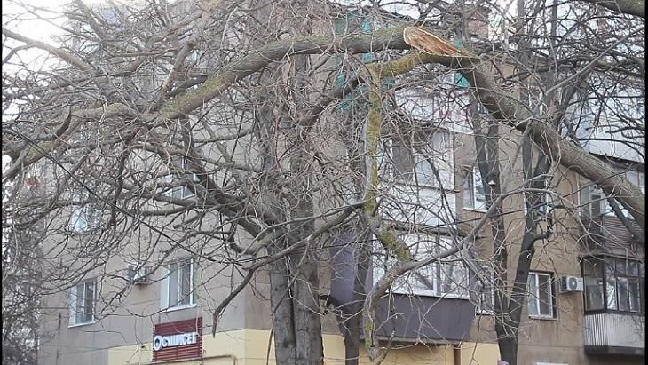 аварийное дерево во дворе