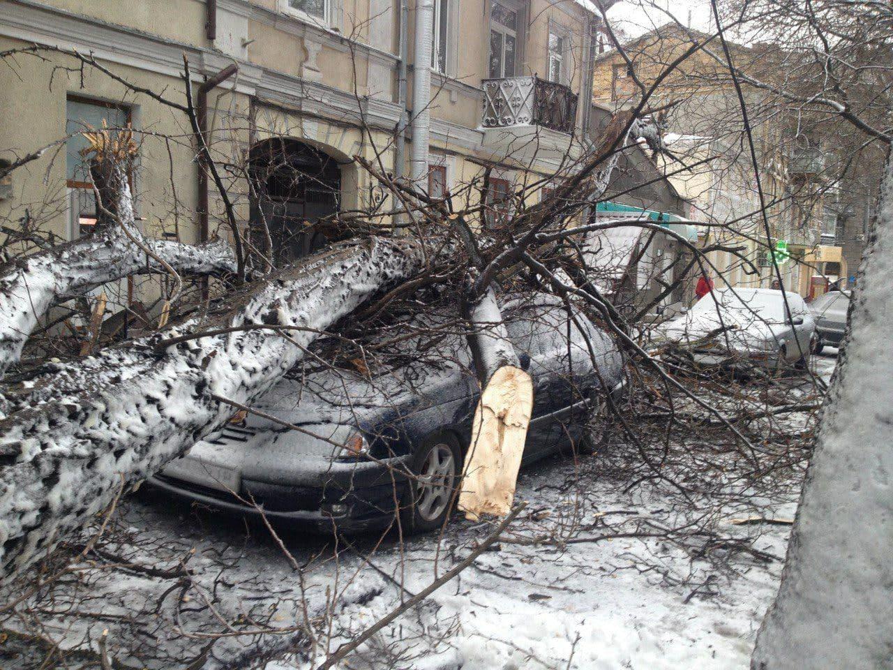 упало дерево на машину