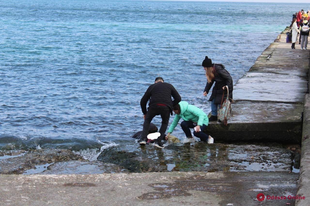 одесситка упала в воду