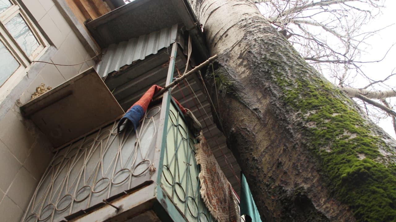 дерево упало на балкон