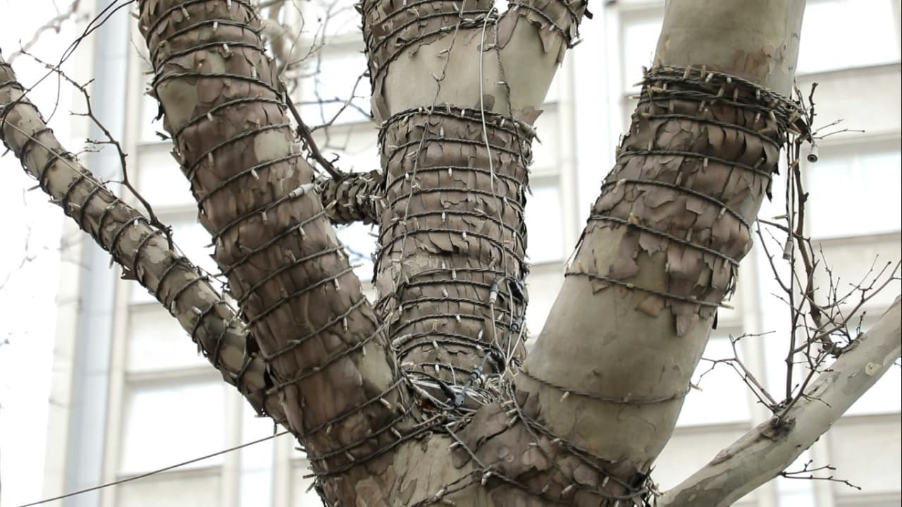 гирлянда на дереве1