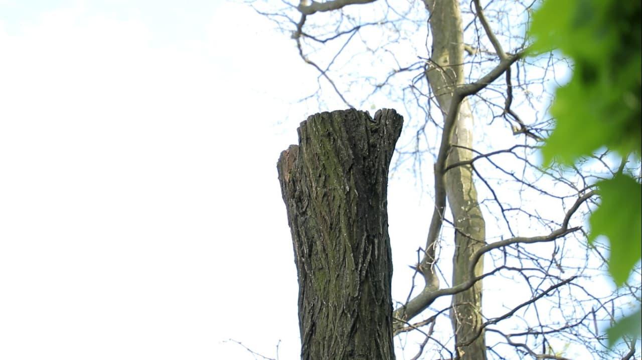 ствол дерева