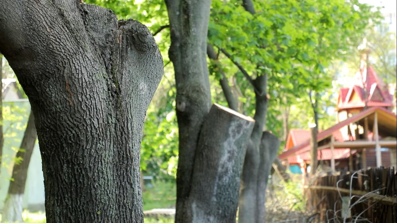 ствол дерева2