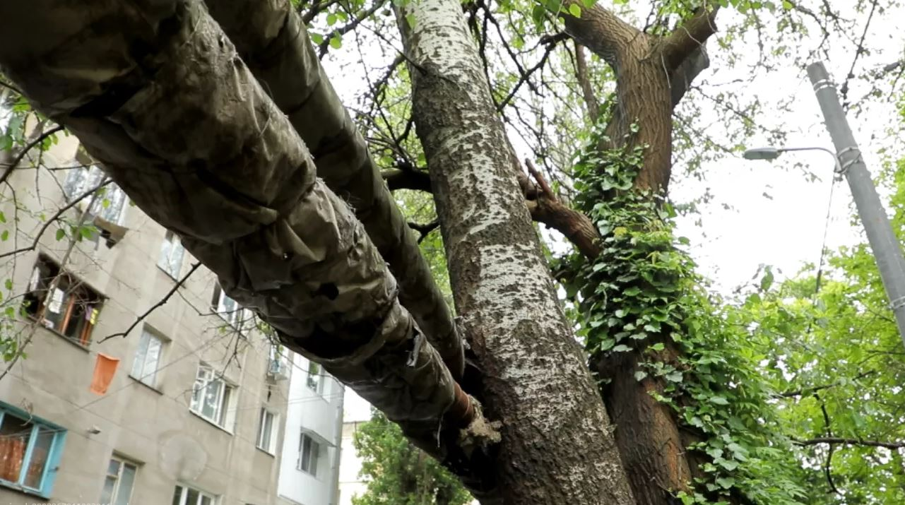 дерево и трубы