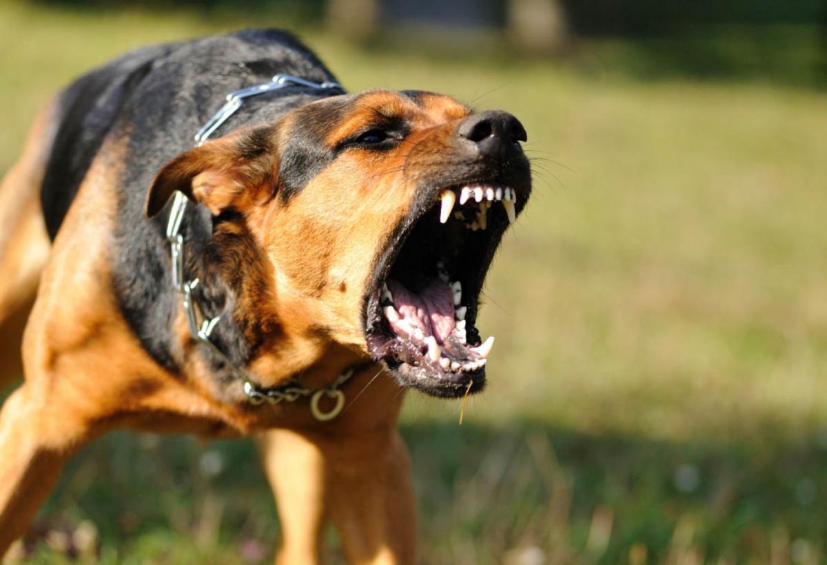 агрессивная собака 3