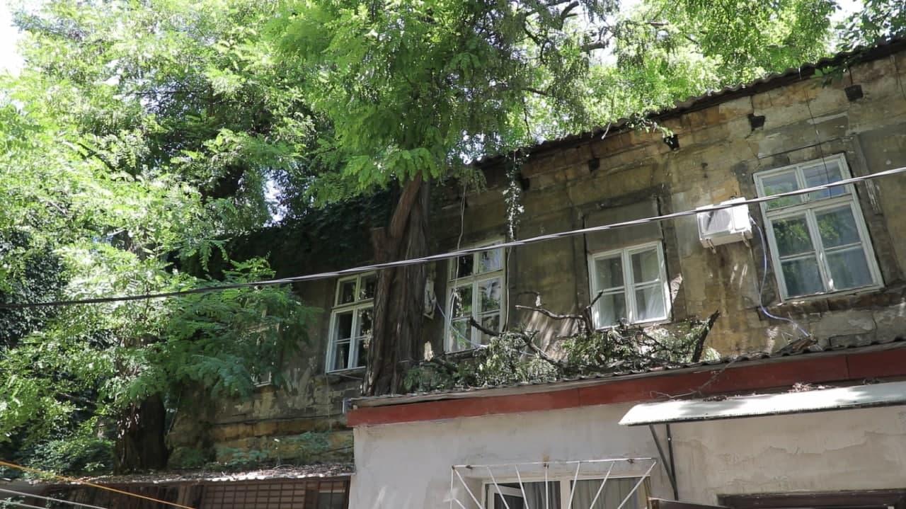 нежинская-дерево1